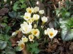 Voorjaar, Spring